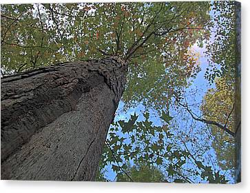 Canvas Print featuring the photograph Look Up by Michael Donahue