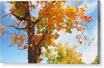 Look Up Canvas Print by Scott Cameron