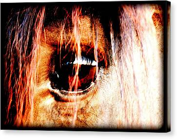 Forelock Canvas Print - Lookin Right Back At You by Kathy Sampson
