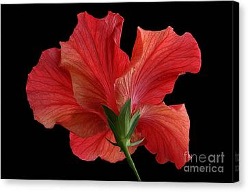 Canvas Print featuring the photograph Looking Back by Judy Whitton