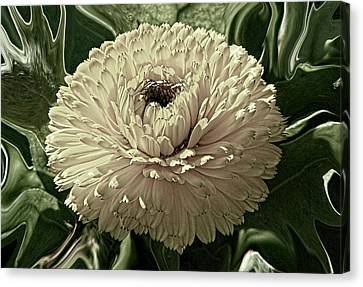 Looking Back Canvas Print by Wendy J St Christopher