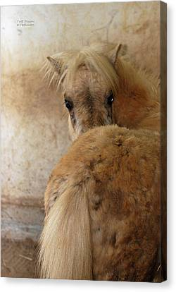 Looking Behind Canvas Print by Teresa Blanton