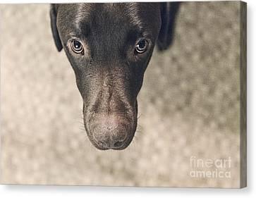 Looking Down On Labrador Canvas Print