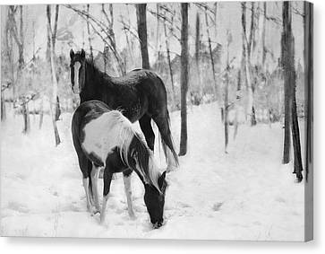Looking For A Bite Canvas Print by Kathy Jennings
