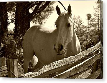 Canvas Print featuring the photograph Looking For A Handout by Kelly Nowak