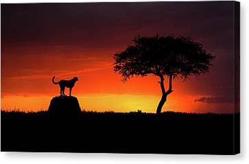 Cheetah Canvas Print - Looking For Something by Faisal Alnomas