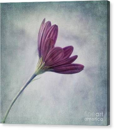 Floral Art Canvas Print - Looking For You by Priska Wettstein
