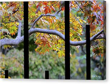 Looking In The Japanese Garden Canvas Print by Alex King