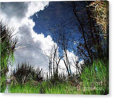 Looking Into The Bog Canvas Print by Joy Nichols
