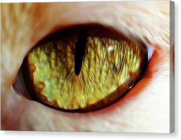 Looking Into The Soul Canvas Print by Mariola Bitner
