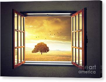 Looking Out The Window Canvas Print by Carlos Caetano