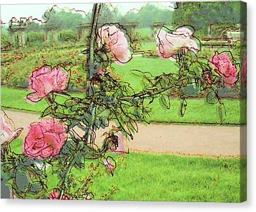 Looking Through The Rose Vine Canvas Print by Stephanie Hollingsworth