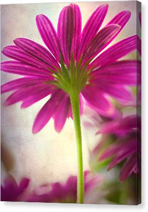 Looking Up 11x14 Canvas Print by Pamela Gail Torres