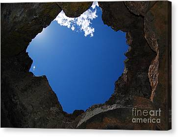 Canvas Print featuring the photograph Looking Up 2 by Debra Thompson