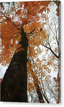 Canvas Print featuring the photograph Looking Up by Alicia Knust