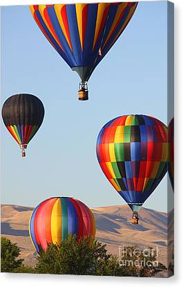 Looking Up Canvas Print by Carol Groenen