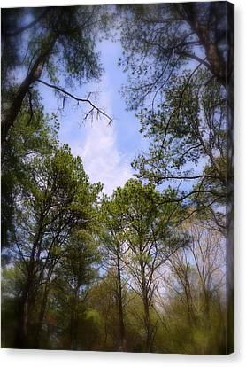 Canvas Print featuring the photograph Looking Up by Jim Whalen