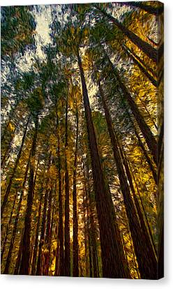 Sonoma County Canvas Print - Looking Up by John K Woodruff