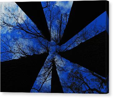 Looking Up Canvas Print by Raymond Salani III