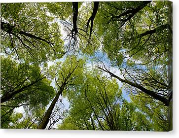 Canvas Print featuring the digital art Looking Up by Ron Harpham