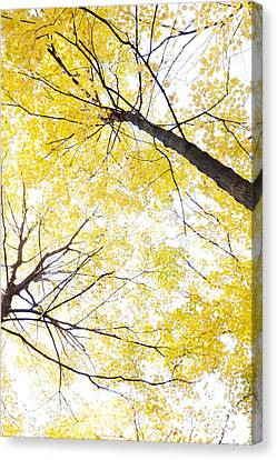 Looking To The Heavens Canvas Print - Looking Up To The Heavens by Patty Colabuono