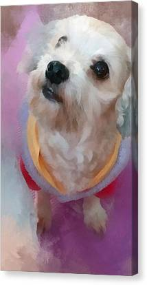 Looking Up To You Canvas Print by Tony Chong