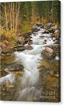 Looking Upstream Canvas Print