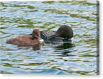 Loon And Baby Canvas Print