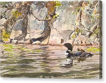 Loons At Eldrege's Rock Canvas Print by David Gilmore