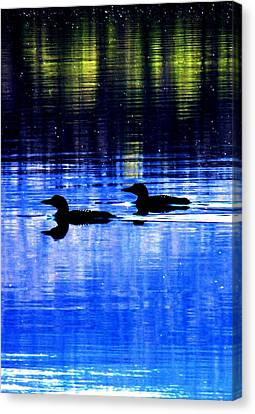 Loons In Pittsburg Canvas Print by Will Boutin Photos