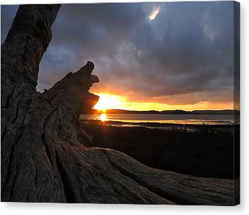 Los Osos Driftwood Canvas Print by Paul Foutz