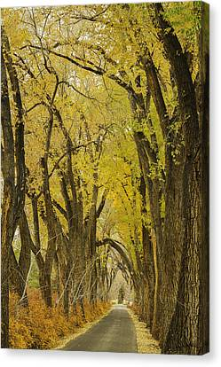 Los Poblanos Ranch Drive-002 Canvas Print by David Allen Pierson