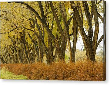 Los Poblanos Ranch Drive-003 Canvas Print by David Allen Pierson