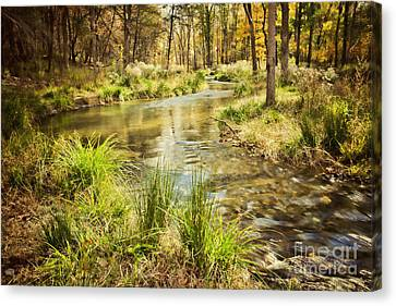 Lost Creek In Autumn Morning Canvas Print by Iris Greenwell