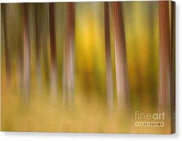 Lost In Autumn Canvas Print by Beve Brown-Clark Photography
