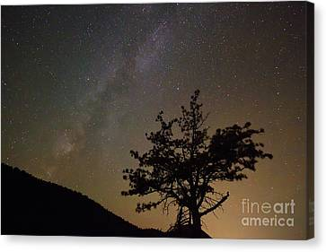 Lost In The Night Canvas Print by James BO  Insogna