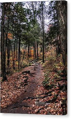 Canvas Print featuring the photograph Lost In Thought On The Blue Ridge Parkway Trail by Debbie Green