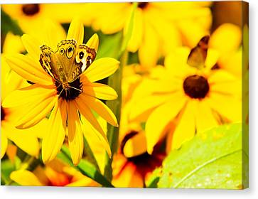 Lost In Yellow Canvas Print by Kevin Read