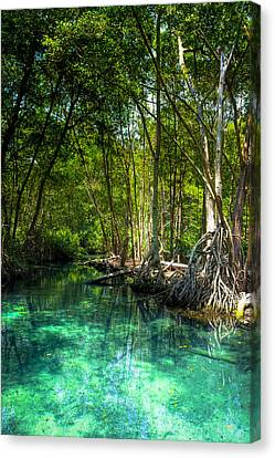 Mangrove Forest Canvas Print - Lost Lagoon On The Yucatan Coast by Mark E Tisdale