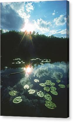 Lost Lake Lilies Canvas Print by Bruce Thompson