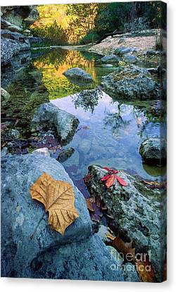 Maple Season Canvas Print - Lost Maples Reflection by Inge Johnsson