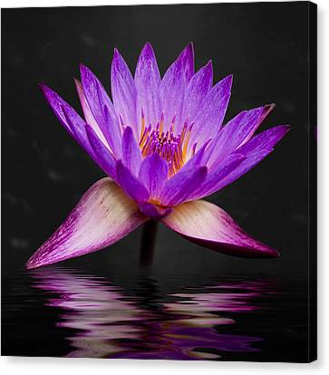 Garden Flowers Canvas Print - Lotus by Adam Romanowicz