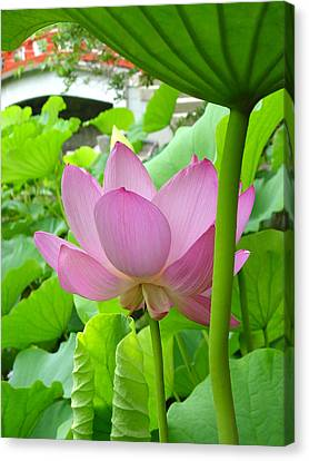 Lotus And Bridge Canvas Print