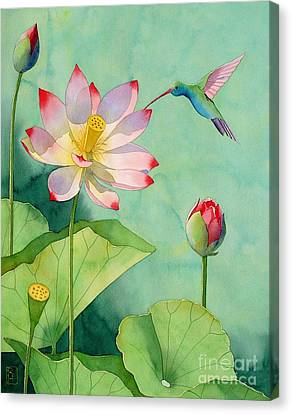 Lotus And Hummingbird Canvas Print by Robert Hooper