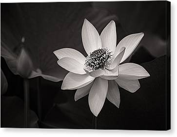 Lotus Black And White Art Series Canvas Print