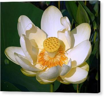 Canvas Print featuring the photograph Lotus Blossom # 1 by Jim Whalen