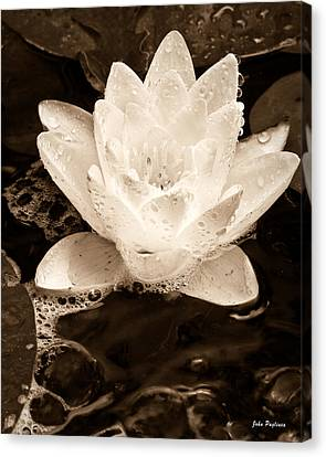 Lotus Blossom Canvas Print by John Pagliuca