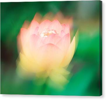 Lotus, Blurred Motion Canvas Print by Panoramic Images