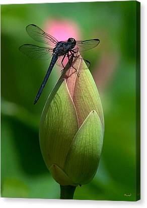 Canvas Print featuring the photograph Lotus Bud And Slatey Skimmer Dragonfly Dl006 by Gerry Gantt