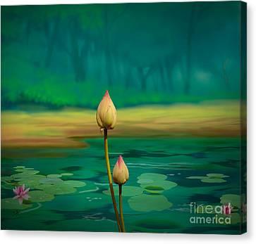 Lotus Buds Canvas Print by Bedros Awak